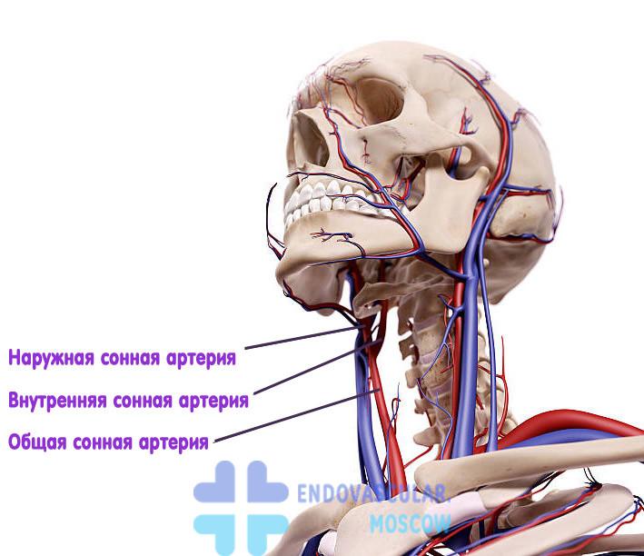 Картинки для сонных артерий